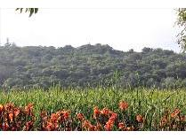 Vacant Land in for sale in Plettenberg Bay, Plettenberg Bay