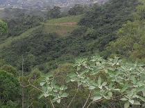Vacant Land in for sale in Kwazulu-natal, Ethekwini