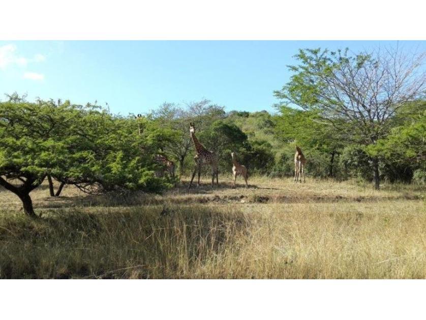 Farm-standar_1446304540-Empangeni, uMhlathuze